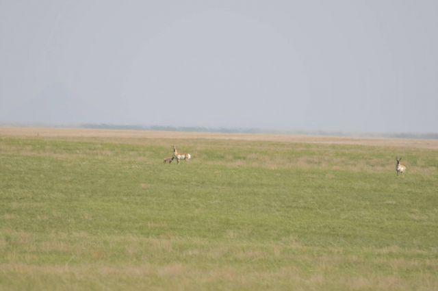 Antelope Kid